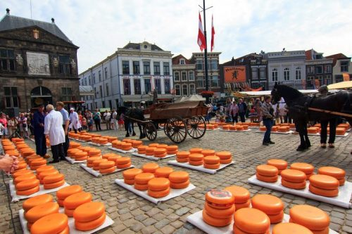 Gouda cheese of Holland