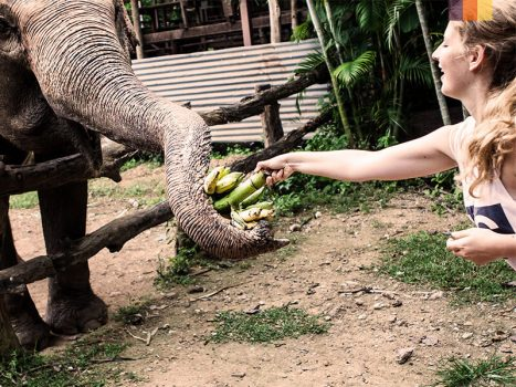 Woman gives bananas to an elephant