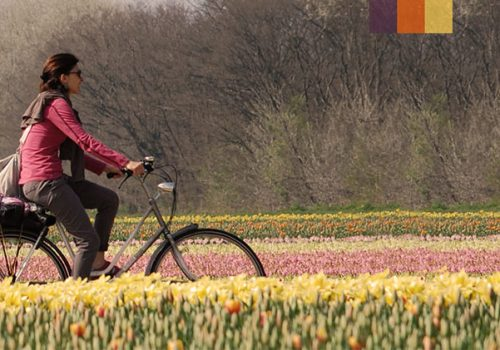 Cyclists ride through Holland
