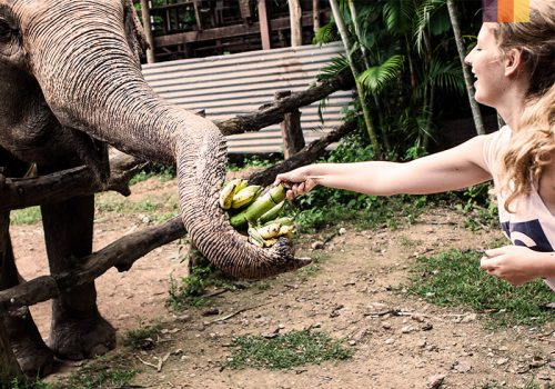 Girl gives food to elephant