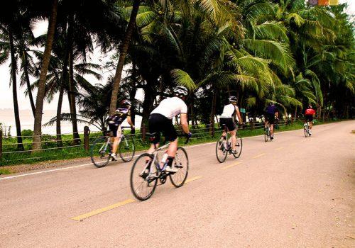 Cyclists ride along the palm trees