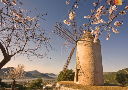 Picture of a windmill and blossoms in Mallorca
