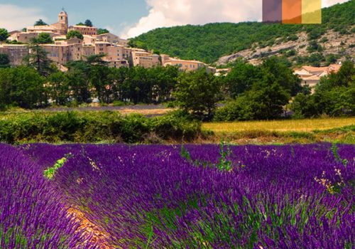 View of the Lavender Fields in the Provence