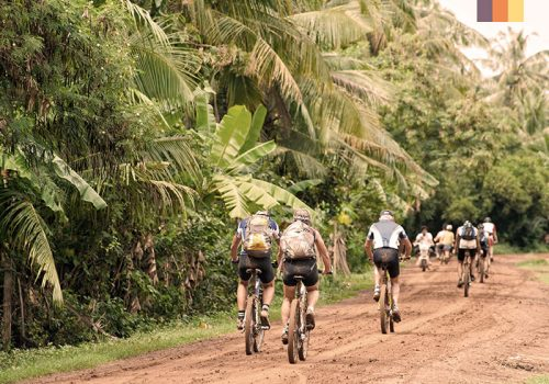 Cyclists ride along the bamboo trees
