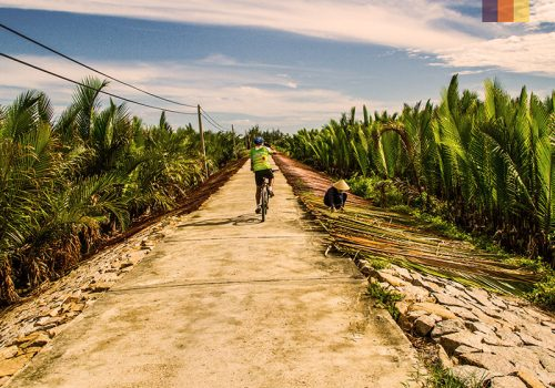 Cyclist rides along the rice plantations