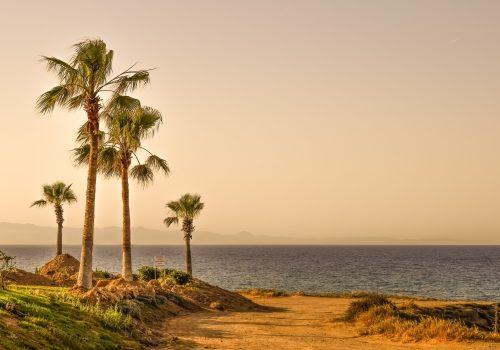 Palm trees at the coast