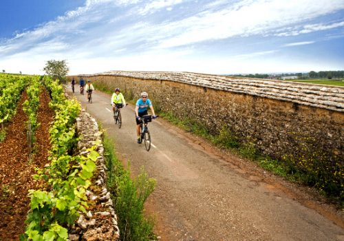 Cyclists ride along the vineyards