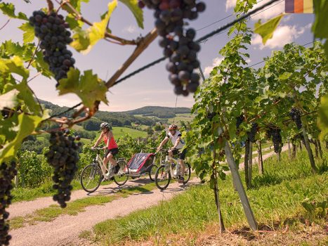 Cyclists ride along the wine yards
