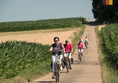 Cyclists ride along the fields in Belgium