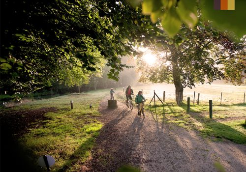 Cyclists ride in the nature of Belgium