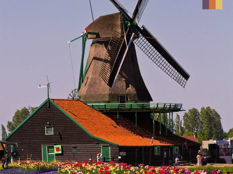 Dutch Windmill surrounding by colourful tulips