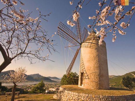 a typical mallorca windmill in the flatlands
