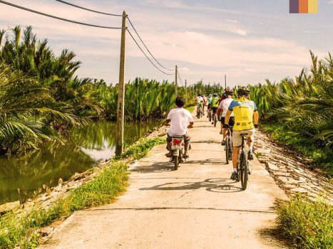 a group of road cyclists between palm trees in vietnam