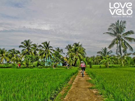 a cyclist on a path in a paddy field surrounded by palm trees in thailand